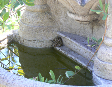 Frog5x4fountain935