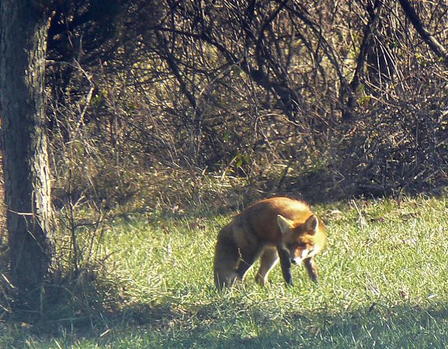 Fox9x7298