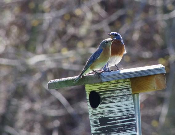 Bluebird72couple1153