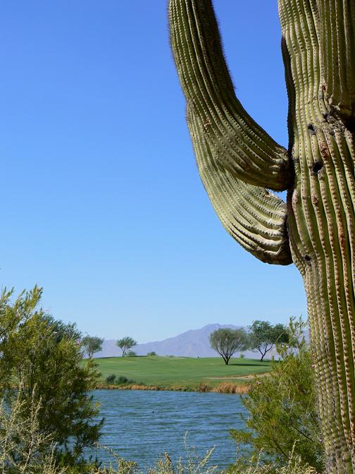 Cactusrivermts7x9