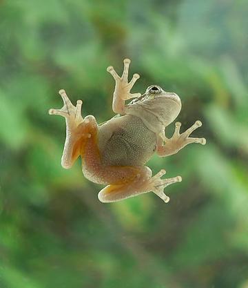 5x6treefrog