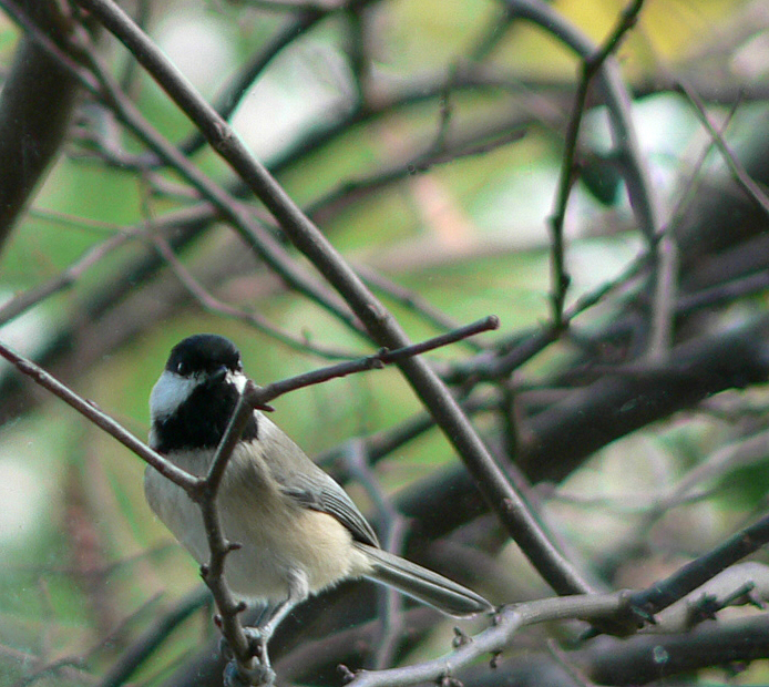 Birdsatwindow_008