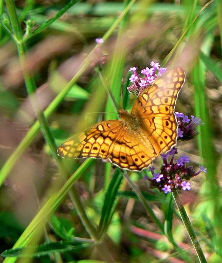 Butterflycrop6x7