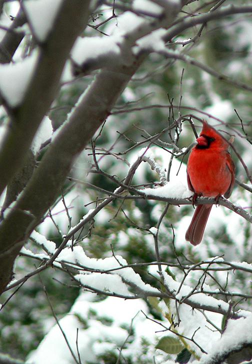Cardinal7x10