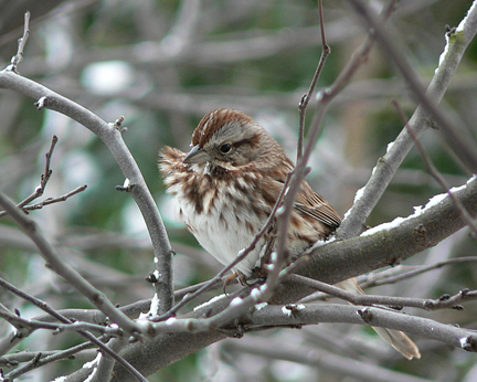 Sparrow6x5